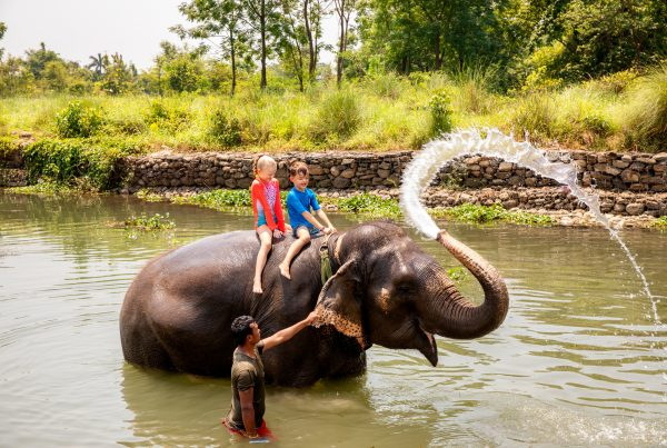 Elephant bathing Chitwan