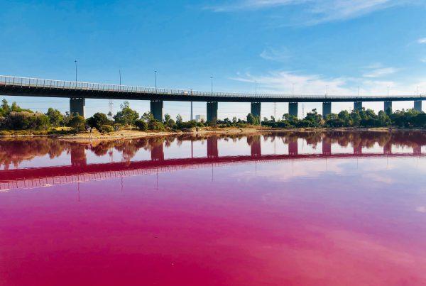 Pink Lake Melbourne Australia
